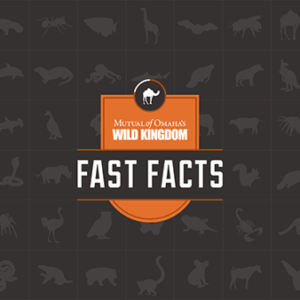 Fast Facts logo